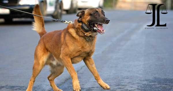 dog bite Blog Image